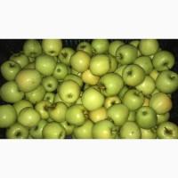 Продам Яблоки разных сортов на Экспорт