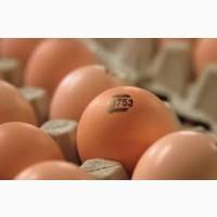 Инкубационное яйцо Бройлера КОББ 500