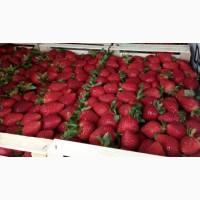 Продам клубнику А также есть другие ягоды фрукты