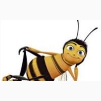 Купим дорого мед с рапса и акации