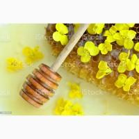 Покупаем дорого мед с рапса. Вся Украина