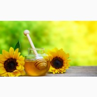 Купим дорого мед с подсолнуха и рапса