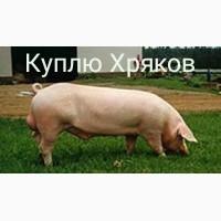 Куплю Свиней Хрякив Свиноматок