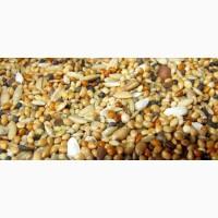 Зернові, бобові, некондицію, зерновідходи куплю дорого