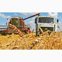 Перевозка зерна и зерновых грузов по Украине