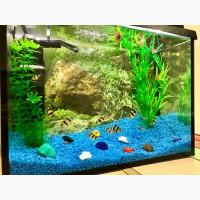 Обслуживание аквариума. чистка