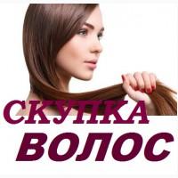 Скупка волос в Павлограде очень дорого