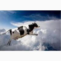 Куплю коров баранов быков свиней лошадей