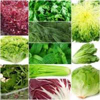 Ищем поставщиков по импортной зелени и овощам