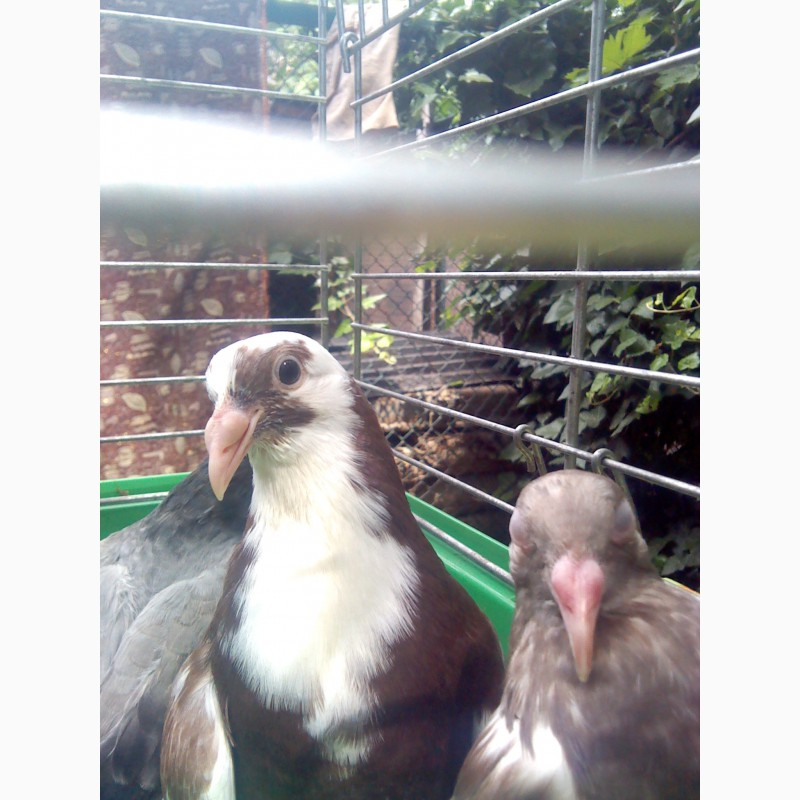 Шутерсток натяжные потолки фотопечать фото голуби