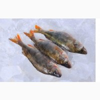 С/м річкова риба оптом. Икряна риба
