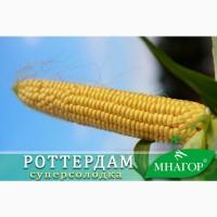 Насіння ультроранней цукрової кукурудзи Роттердам F1 від Мнагор (аналог Спіріт)