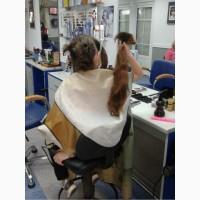 PapaHair» занимается скупкой волос дорого в Харькове